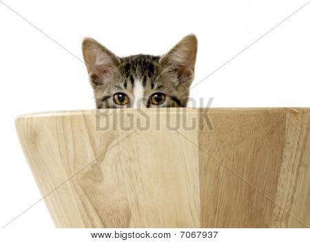 Kitten Peeking Over Side Of Salad Bowl