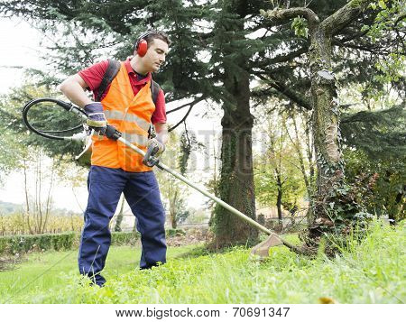 Man Working With Hedge Trimmer