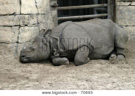 Sad Rhinocerus