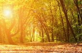 stock photo of wild adventure  - Magical autumn forest with amazing sunlight on a sunny day - JPG