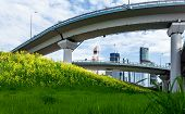 stock photo of trestle bridge  - High trestles over a green meadow with daisies and skyscrapers on the background - JPG