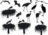 picture of stork  - illustration with storks and cranes isolated on white background - JPG