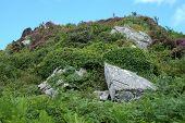 foto of hilltop  - Heather growing on a rocky Scottish island hilltop - JPG
