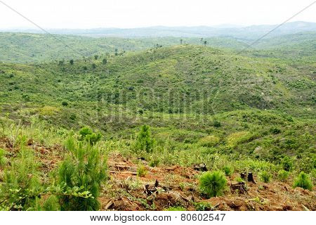 Deforestation - View over the Mountains in Malawi, Central Africa