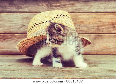 Curiosity Kitten Under Hat