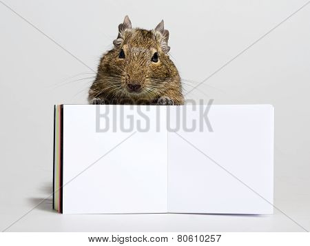 Funny Hamster With Blank Poster In Paws