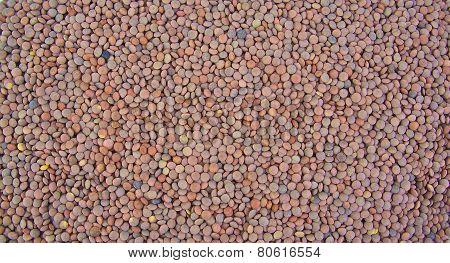 Lentils arranged as a background. Closeup.