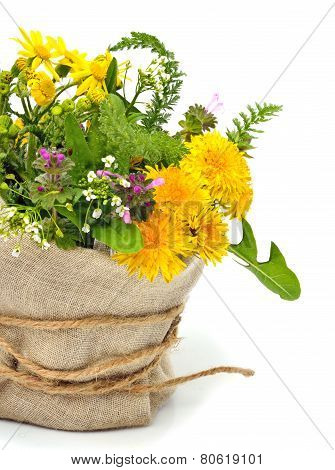 Beautiful Wildflowers, Chamomiles, Milfoil Isolated On White