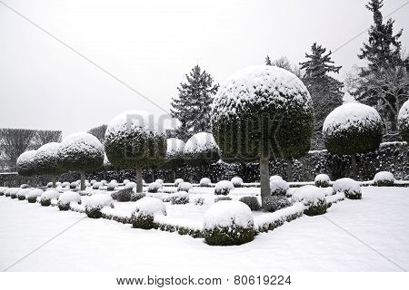 Garden of box tree and yews under the snow (France Europe)