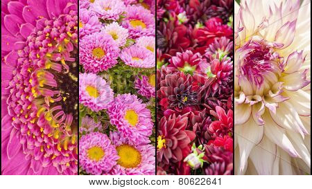 Collage Of Yellow And Pink Flower Sections
