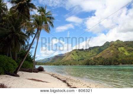 desert tropical sand beach