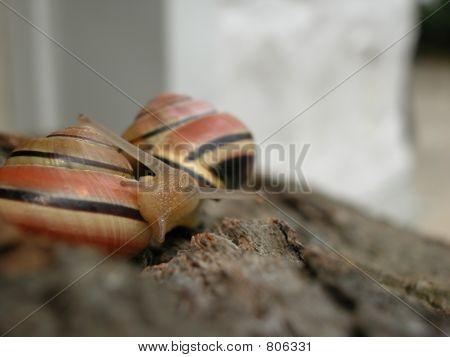 Mollusk Rub