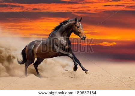 Beautiful bay horse free running