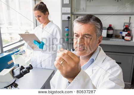 Senior scientist looking at slide at the laboratory