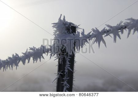hoarfrost Fence Post