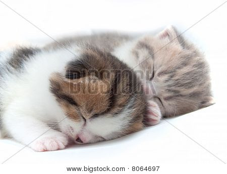 Two Sleeping Small Kittens