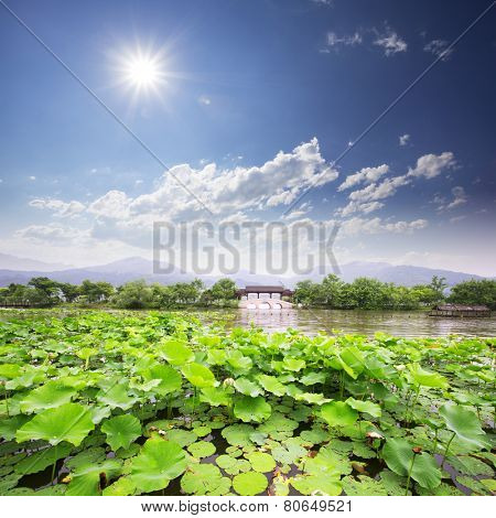 skyline,lake and waterlily in hangzhou