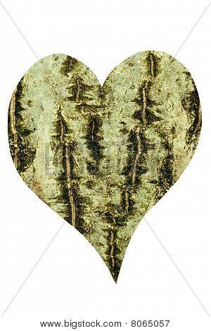 Corazón de corteza de nogal común