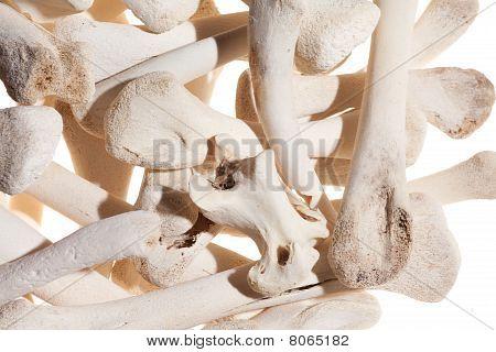 Heap Of Bones
