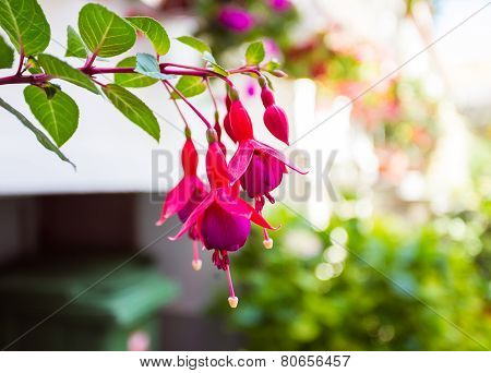 red flower on colorful background