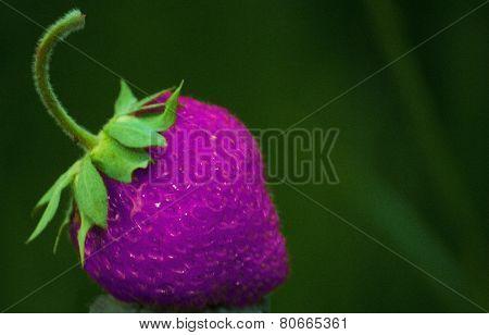 Pink strawberry