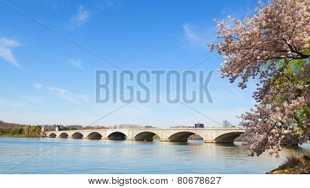 Arlington Memorial Bridge during cherry blossom festival in Washington DC.