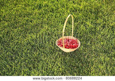 Raspberry In Basket
