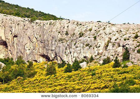 Mediterranean Landcape