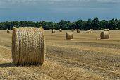 foto of haystacks  - The sloping wheat field with haystacks - JPG