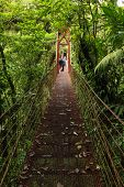 picture of canopy  - High suspension bridge allowing tourists to view the wildlife in the forest canopy - JPG