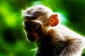 image of macaque  - Long - JPG