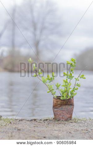 Fern Growing Rusty Can