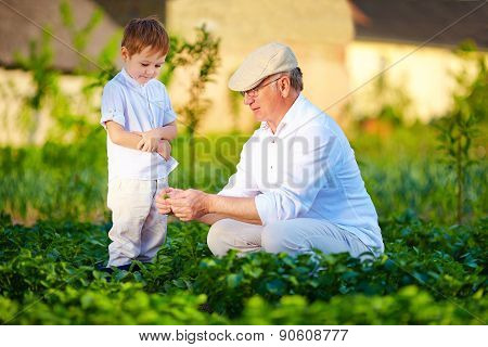 Grandpa Explains To Curious Grandson The Nature Of Plant Growth