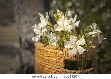 Flower background, Beautiful white flowers with basket on sunshine, spring bloom, retro background,