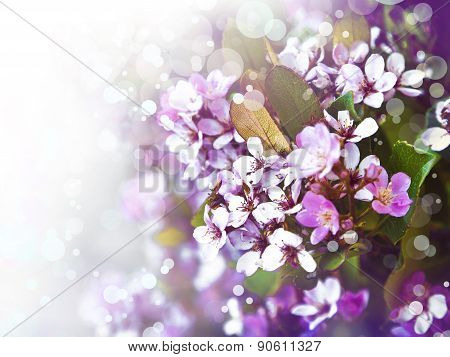 Beautiful spring tree flowers, Pink bloom, spring flowers background, Spring Cherry blossoms