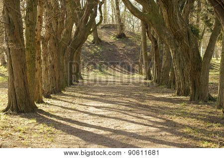 Tree alley