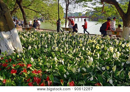 Springtime In Hanoi With Lilies Around Lake Hoan Kiem.