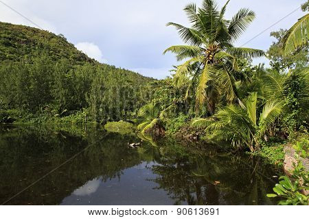 Beautiful lake with palm trees near the Le Chevalier Bay Guesthouse