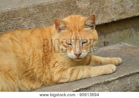 Male Tabby Cat Laying On Concrete Step