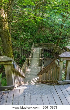 Walkway Through The Forest 2
