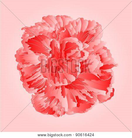 Tropical Flowers Pink  Hibiscus Vector