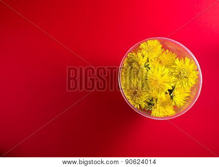 Overhead Dandelion Flowers On Red