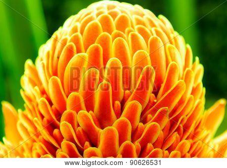 Single Orange Bloom