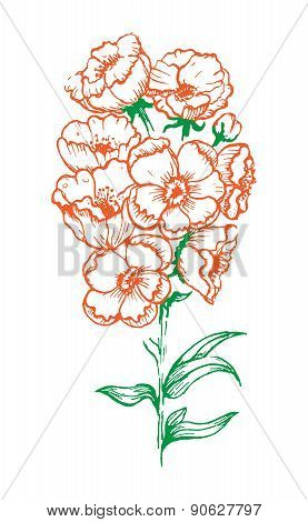 Flower With White Background