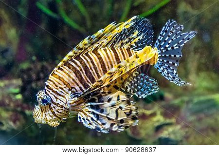 Exotic Coral Fish In Aquarium