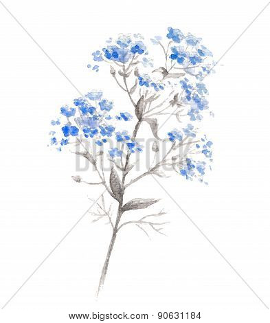 Watercolor branch of blue forget-me-flower