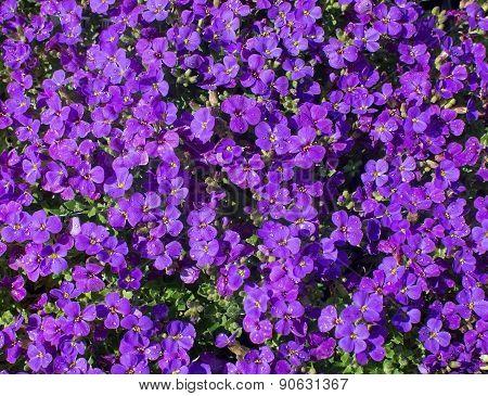 Purple Flowers Full Frame