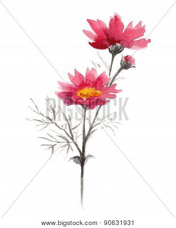 Watercolor pink summer flowers.