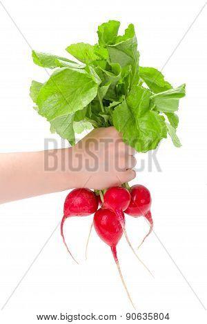 Hand Holding Red Radish Bunch