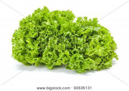 Big Green Leaf Lettuce